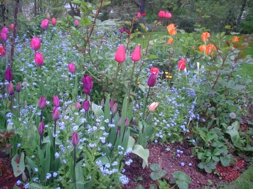 Tulips Seattle